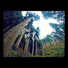 【sken0227】さんのInstagramをピンしています。 《島田の気まぐれ一人旅。  #京都 #福知山 #kyoto  #fukutiyama  #森 #自然 #natural  #針葉樹  #針葉樹林  #softwood  #like4like  #instagood  #follow4follow  #gopro  #goproのある生活》