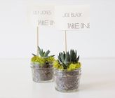 Do It Yourself Eco Friendly Succulent Place Cards - just take the card out and you have a cute little succulent plant