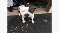 A1104 DANIKA-URGENT KILL LIST-Clayton County AC by Partners for Pets, Inc.
