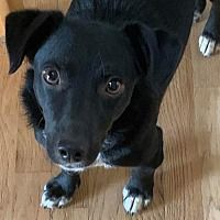 Dachshund Adoption, Pet Adoption, Foster To Adopt, Denver Colorado, Safari, Meet, Babies, Pictures, Dogs