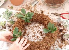 Step-by-step instructions for making a succulent wreath that really lives! #garden #diy   From Whitney of The Curtis Casa and The Home Depot blog