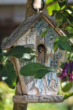 Little bird nest house ✿⊱╮ ~ Sarah's Country Kitchen ~ Casa Do Rock, Nester, Wooden Bird Houses, Bird House Feeder, Bird Boxes, All Birds, Backyard Birds, Simple Pleasures, Bird Cage
