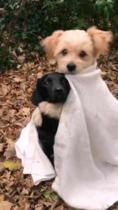 Cute Baby Dogs, Cute Funny Dogs, Cute Dogs And Puppies, Cute Funny Animals, Doggies, Baby Animals Pictures, Funny Animal Pictures, Animals And Pets, Cute Animal Videos