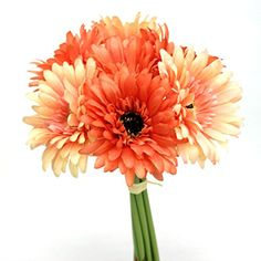 Gerbera Daisy Bouquet Tied with Raffia Assorted Colors (Coral Mix) AtoZ Online LLC http://www.amazon.com/dp/B00T9WFINY/ref=cm_sw_r_pi_dp_hgSivb1PS2MA2