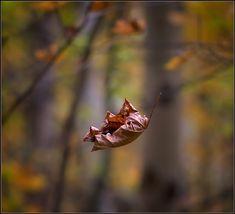 hoja-seca-cayendo-otoño.jpg (879×800)