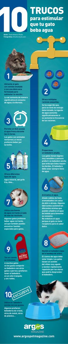 ¿Tu gato tiene insuficiencia renal crónica? 10 trucos para estimular que beba agua - ArgosPet