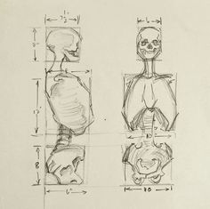 """Pencil on paper human anatomy study of skeleton. Unsigned. Unframed, age toning, light creasing. 8"""" L x 10"""" H #drawing"""