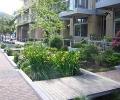 Swales as part of the stormwater management plan for Portland's South Waterfront. Photo courtesy Nevue Ngan Assoc.