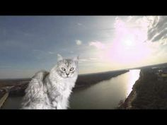 Captain Sean Coonery's FURst Flight.  This is Internet celebrity Sean Coonery the BIG Maine Coon cat's first time flying the DJI Phantom.  Enjoy and please enjoy my other DJI Phantom videos and big Maine Coon cat videos too!  Filmed with GoPro HERO3 Black Edition camera in 1080P 60FPS.