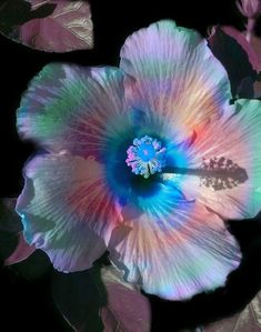 A rainbow in the life of a flower....