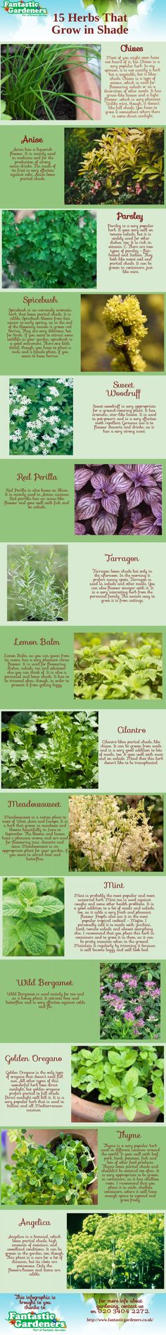 Nice infographic about herbs that grow in shade.