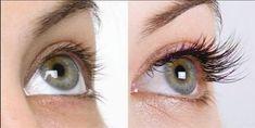 All Natural Eyelash Enhancer Serum – Glamour Galor™ How To Grow Eyelashes, Thicker Eyelashes, Natural Eyelashes, Thick Eyebrows, Longer Eyelashes, Long Lashes, Mink Eyelashes, False Lashes, Eyelash Enhancer