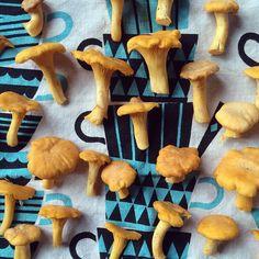 #chanterelle #wildfood #teatowel #santsi #polkkajam Tea Towels, Finland, Stuffed Mushrooms, Pumpkin, Halloween, Instagram Posts, Desserts, Food, Stuff Mushrooms