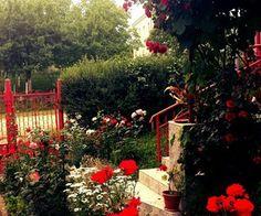 So #beautiful #roses