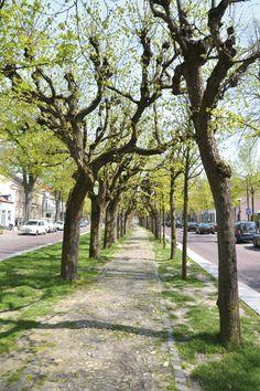 Het lijkt wel Parijs, maar het is...Oisterwijk!