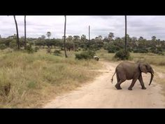 only 22 secs long, but watch the end, so cute little baby elephant running