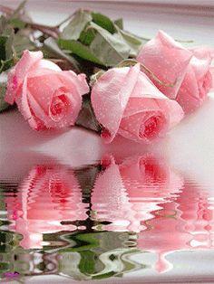 Gifs de rosas con reflejos.