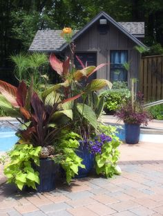 {poolside containers}  By Ooh La La Designs ~ Fonthill, ON, Photography ~ Studio Southwest