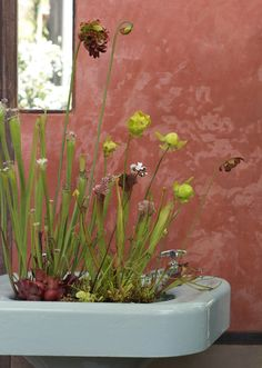 pitcher plants in a sink at Flora Grubb Gardens
