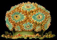 Groups / Artist Palette Challenge / Conversations / APC #67 Ersnt Haeckel :: COLOURlovers