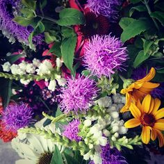 Bloom, Plants, Summer, Summer Time, Summer Recipes, Plant, Planting, Planets