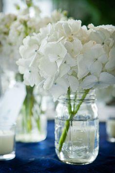 hydrangea. it's all you need.