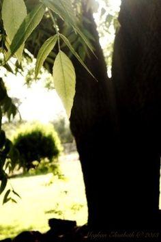 Tree by M.E.