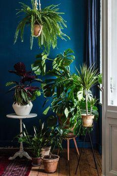Dom taki jak lubimy, czyli DIY porady i inspiacje dla pięknego domu: monstera, pilea , perski dywan i kilka sztuk mebli w stylu mid century