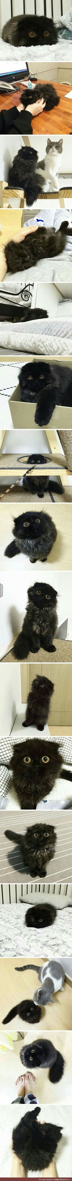 Black kitten with huge eyes