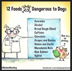 Please be mindful when feeding your dog human food. I Love Dogs, Puppy Love, Happy Puppy, Dangerous Foods For Dogs, Caffeine Chocolate, Raw Salmon, Tumblr, Service Dogs, Training Your Dog