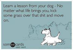 Learn a lesson from your dog- No matter what life brings you, kick some grass over that shit and move on!