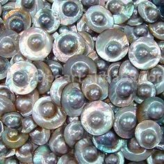 Mabe pearls (blister pearls) - These are semi-spherical cultured pearls. Since these pearls are cultured against the shell of the mollusc, one side is flat which lends itself well to creating cabochon type jewellery