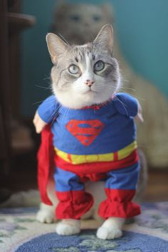 If I had a cat (or small dog) I would dress them in things like this. I don't think I'd have a boyfriend after doing so, however. I don't know if Jacob would put up with me haha!