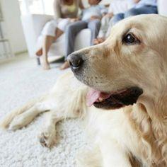 Tabaco, mascotas, tuberías... Te contamos como neutralizar los malos olores en casa y que siempre todo huela a a limpio.