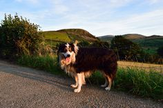 For two years running Laddie and I were blessed with fine weather on my birthday…