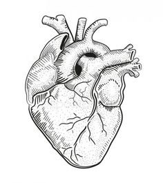 Illustration about Hand drawn vector illustration or drawing of a human heart. Illustration of drawn, hand, love - 50187983 Human Heart Drawing, Anatomical Heart Drawing, Human Heart Tattoo, Heart Illustration, Yoga Illustration, Dinosaur Illustration, Rabbit Illustration, Mountain Illustration, Coffee Illustration