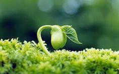 Nace, crece y vive.