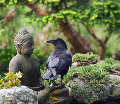 zen crow.