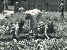1972- Chicago Horticultural Society's children's programs began at the Garden, and the first summer vegetable garden project for needy children was launched.