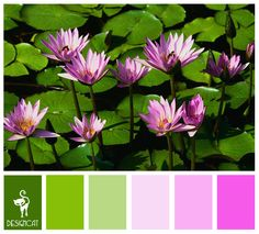 Water Lilly: Green, Lime, Apple, Pastel, Pink, Cerise - Colour Inspiration pallet