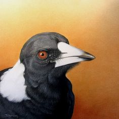 AUSTRALIAN MAGPIE BY MARTIN AVELING Australian Animals, Australian Art, Pretty Birds, Beautiful Birds, Acrylic Painting Inspiration, Illustration Art, Illustrations, Bird Artwork, Bird Drawings