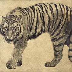 Siberian Tiger II / Panthera tigris altaica / 2008 / 100 x 100 cm / Pencil on panel by Vicky White Tiger Artwork, Tiger Painting, White Tiger Tattoo, Black And Grey Tattoos, Animal Sketches, Animal Drawings, Tiger Drawing, Tiger Sketch, Tribal Dragon Tattoos