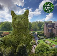 Me topiarising The Topiary Cat - Skulpturen, Kunst in Gärten, Parks - Cat Garden, Garden Art, Garden Design, Garden Ideas, Amazing Gardens, Beautiful Gardens, Animals And Pets, Cute Animals, Parks