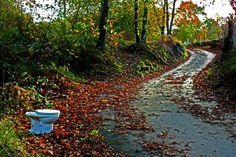¡¡¡ Ooooohhhhh !!! ¿especial para caminantes?. Camino a La Galguera. Concejo de Llanes. Principado de Asturias. Spain.    [By Valentin Enrique].