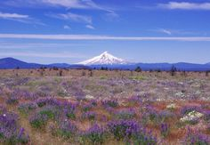 Mt Hood Oregon - Mountain Photography