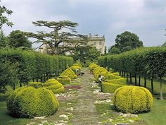 Highgrove House, Tetbury, Cotswolds--Cool shrubs.  Dream of doing a garden tour of the Cotswolds.