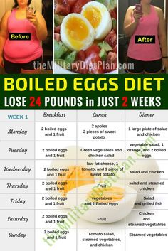 Today, the boiled egg diet are becoming highly popular since it has helped a lot people worldwide to lose twenty-four pounds in only fourteen days. As of the fact that obesity is one of the