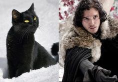 Game of Thrones Characters as Cats   John Snow