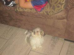 mijn hondje als pupy