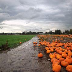 My Favorite Fall View